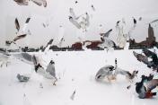 Fragmented Flights >next images