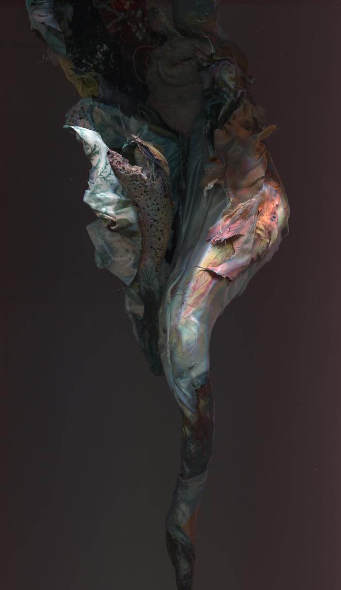 bird skin 1