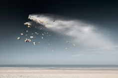 Sand comes alive and creatures are born in frozen moments of weightlessness...
