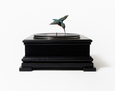 Taxidermy kingfisher, record player, vinyl record 42 x 42 x 33 cm