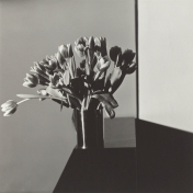 Tulips, 1978, Robert Mapplethorpe © Robert Mapplethorpe Foundation