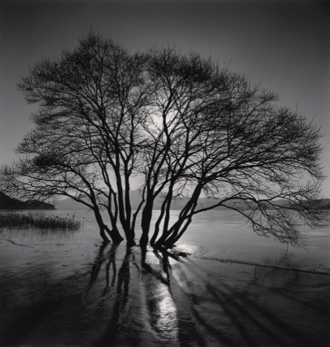 Yedang Reservoir Tree, Chungcheongnam-do, South Korea. 2018 ©Michael Kenna
