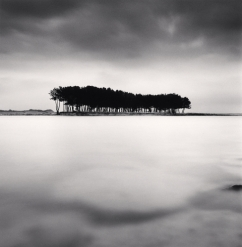 Pine Trees, Study 4, Wolcheon, Gangwondo, South Korea. ©Michael Kenna