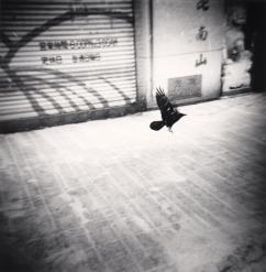Black Bird Flying, Sapporo, Hokkaido, Japan ©Michael Kenna