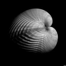 Edward Weston on The Passenger Times nature 05