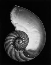 Edward Weston on The Passenger Times nature 06