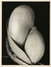Edward Weston on The Passenger Times nature 07