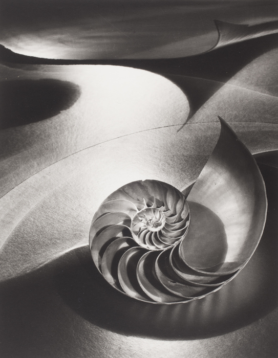 Space Composition with Chambered Nautilus